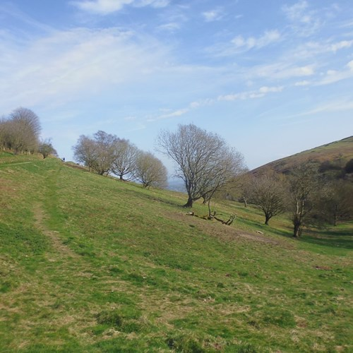 Scrub clearance after Happy Valley North Hill (2) low res.jpg (1)