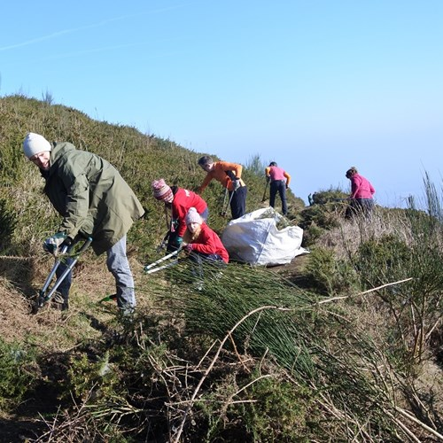 Volunteers clear gorse from a path to improve access