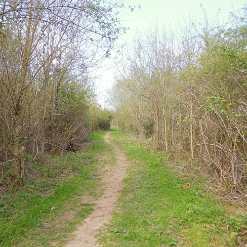 Path Community Woodland (4) low res.jpg