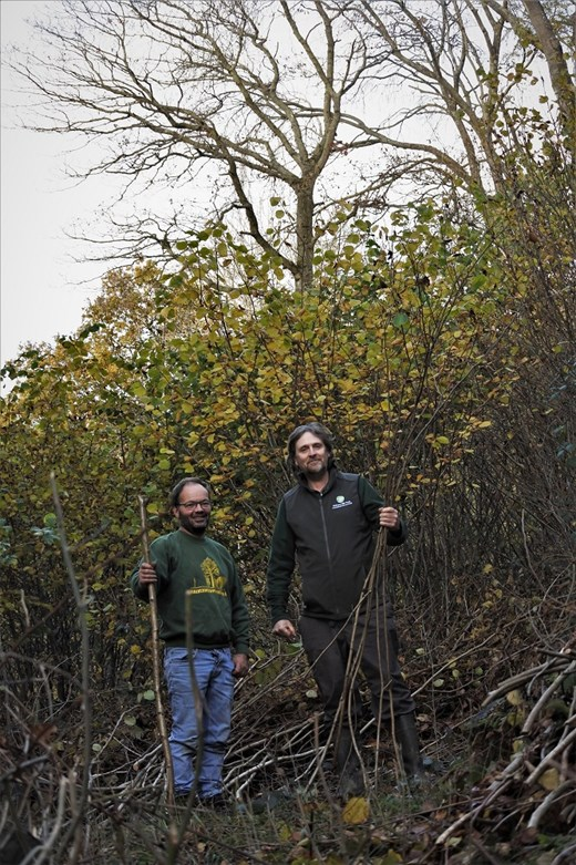 Malvern Coppicing and MHT Parkwood altered low res.jpg