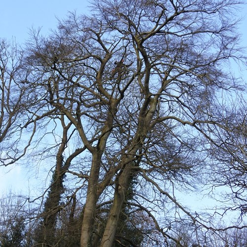 Tree safety work Beech St Anns Road low res.jpg